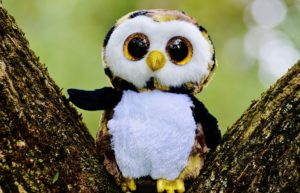 owl-845131_1920